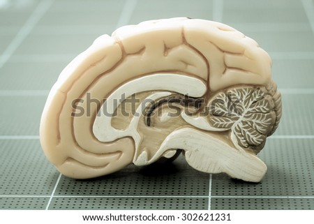 human brain with old color style - stock photo