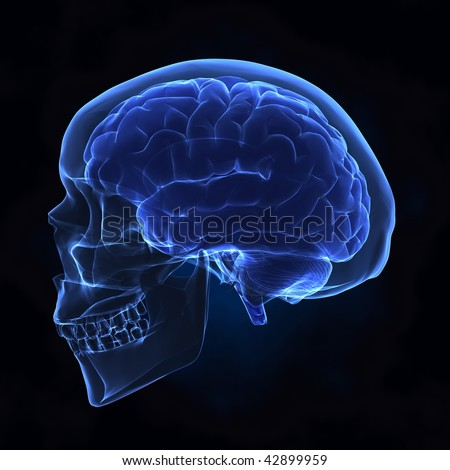 Human brain with skull x-ray left view - stock photo