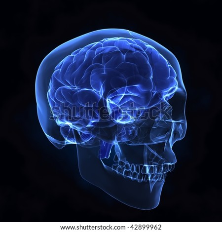 Human brain with skull x-ray view - stock photo