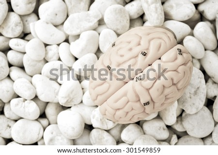 human brain with vintage style - stock photo