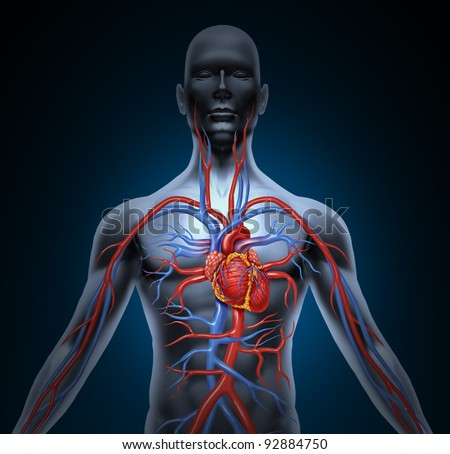 Human circulation cardiovascular system with heart anatomy from a healthy body on a black glowing background as a medical health care symbol of an inner vascular organ as a medical chart. - stock photo
