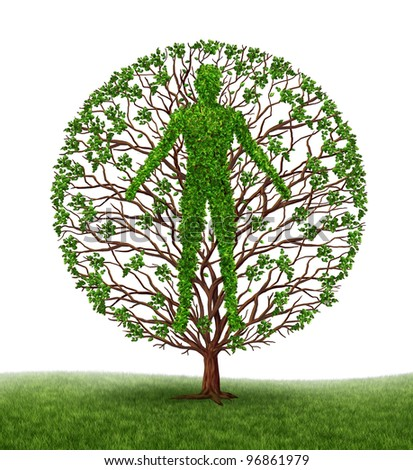 Human development and growth of personality and character in development as a medical icon of health as a tree with branches and green leaves in the shape of a persons anatomical body on white.s - stock photo