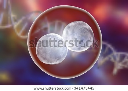 Human embryo on the stage of two cells on background with DNA - stock photo