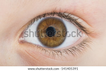 Human eye brown color. Close up studio shot