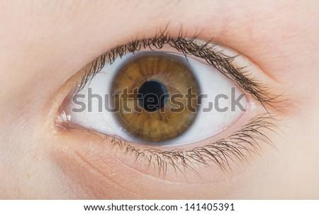 Human eye brown color. Close up studio shot - stock photo