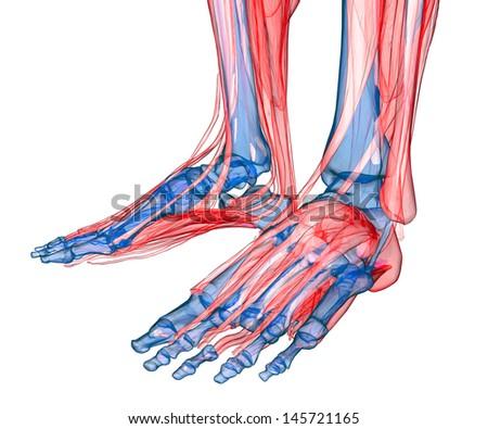 Human feet under X-rays isolated on white - stock photo