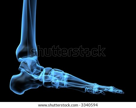 human foot - stock photo