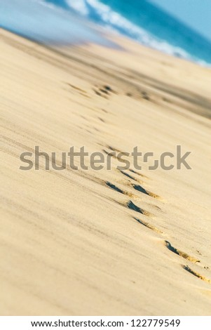 Human foot steps printed into the sand near to sea beach with sea waves in the background - stock photo