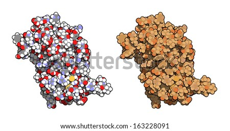Human growth hormone (hGH, Somatotropin) molecule. Natural hormone, used both as a drug and as a doping agent. Left: all atoms as conventionally colored spheres. Right: all atoms shown, brown shaded. - stock photo