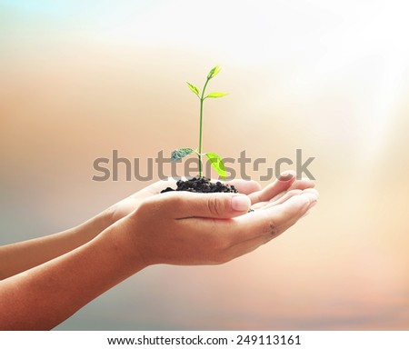 Human hand hold young plant with soil on blurred beautiful sea, ocean, green forest, desert over colorful sunset background. Health Care, Insurance, World Environment Day,  New Life, Beginning concept - stock photo