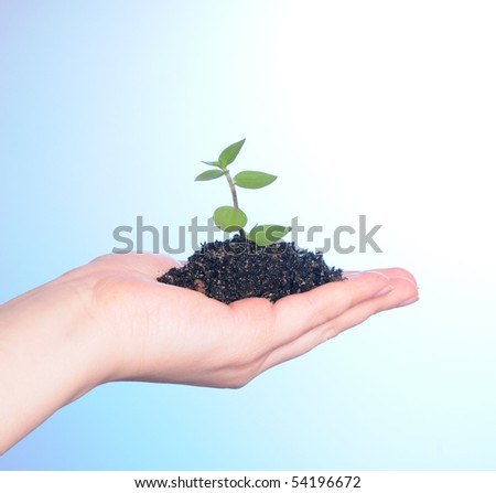 Human hand holding a sprout