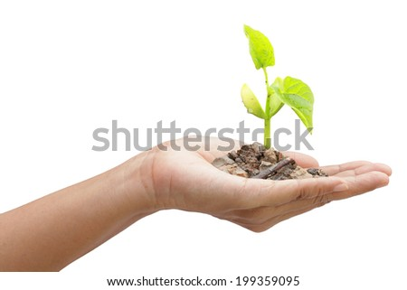 human hand holding a tree isolated on white background. This has clipping path. - stock photo
