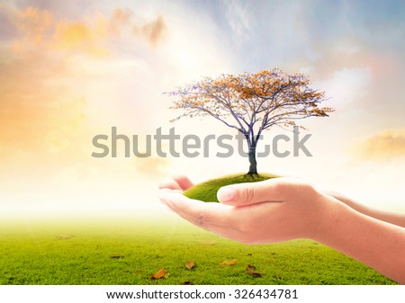 Human hand holding beautiful tree over autumn natural background. Ecology, Tree of Knowledge, Health Care, Insurance, World Environment, Biology, Botany, Education, Trust, Investment, Creation concept - stock photo