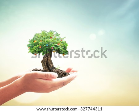 Human hand holding big green plant with soil on blurred abstract beautiful sea, ocean, forest, desert over colorful sunset background. Ecological city, Ecology, World Environment, Food Day concept. - stock photo