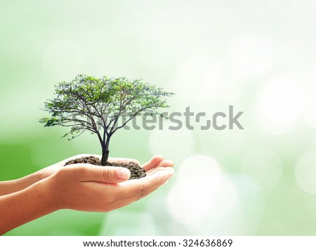 Human hand holding big tree on abstract bokeh forest background. Learning Education Wisdom Tree of Knowledge Go Green Arbor World Environment Day CSR Investment Learn Trust Attitude Philosophy concept - stock photo
