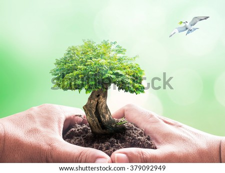 Human hand holding big tree with earth globe of grass and bird flying on blurred nature background. World Environment Day Eco Friendly Save CSR Trust Hour Business Energy Save Press Freedom concept.  - stock photo