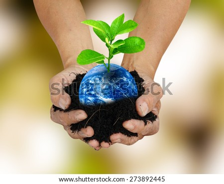 Human hand holding global in soil with little green tree for think earth concept Elements of this image furnished by NASA - stock photo