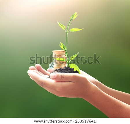 Human hand holding golden coins with two young plants. Seedling and coins. Money coin concept. - stock photo