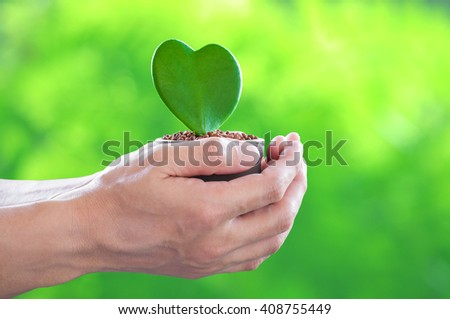 Human hand holding heart shape plant in hands on blurred green background. Ecology ,Spring,Time, Environment Day, concept.