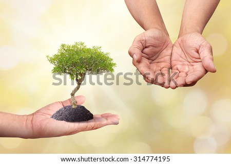 Human hand holding new born tree with care change to other hands over blur background and vintage wood pave - stock photo