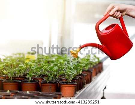 Human hand holding watering can and watering young sprouts in flower pots  - stock photo