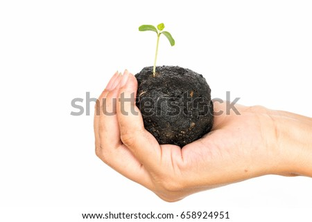Human hand holding young plant with soil on white background, environment concept.