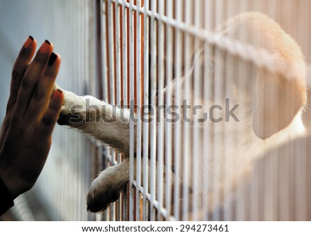 Human hand is touching a cute little doggie paw through a fence of a adoption centre. - stock photo