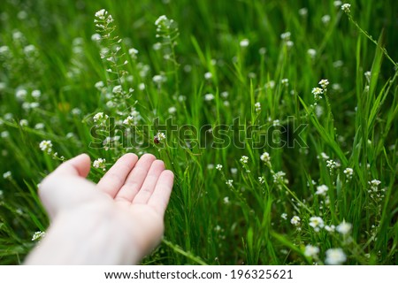 Human hand near little red bug on the green grass