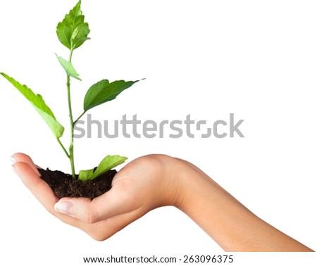 Human Hand, Plant, Growth. - stock photo