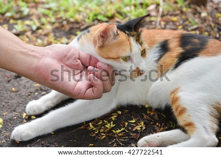 Human hand scratching a thai cat - stock photo