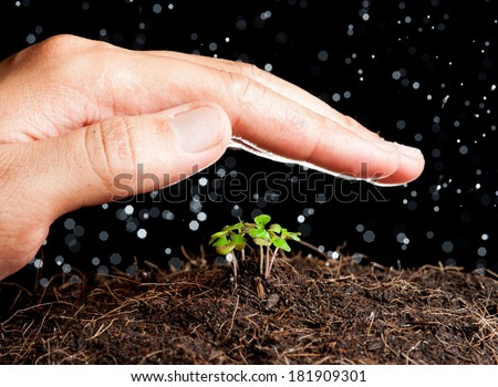 Human hand sheltering a young plant - stock photo