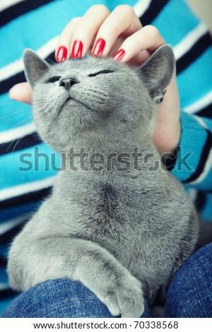 Human hand stroking cat feeling good. Natural colors - stock photo