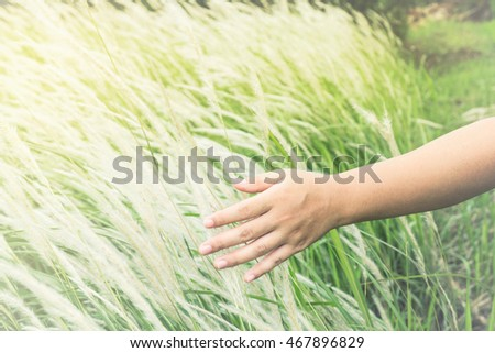 Human hand touching green grass at feeling of soft nature. Adjustment  beautiful color image sepia style.