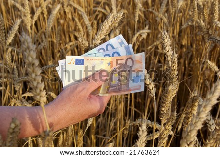 Human hand with euros in wheat field - stock photo