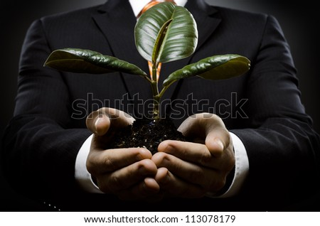 human hands  close  with  scion  rubber plant, business concept - stock photo