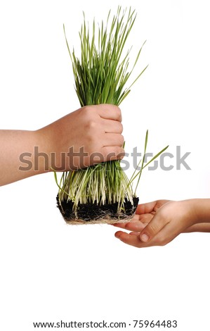 Human hands, floral giving isolated, grass concept - stock photo