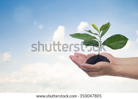 human hands gesture palm up hold a little growing plant on blurred vintage blue sky tone backdrop:man hand with a petite tiny tree:safe world life concept:helping earth conceptual.protect and prevent. - stock photo