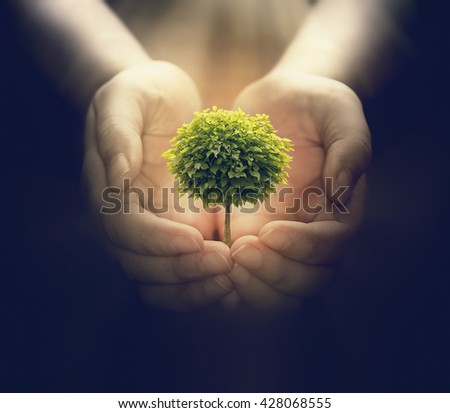 human hands holding a small tree, environment concept image - stock photo