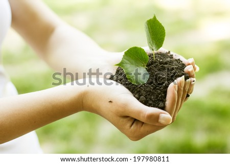 Human hands holding and support small plant to grow up. - stock photo