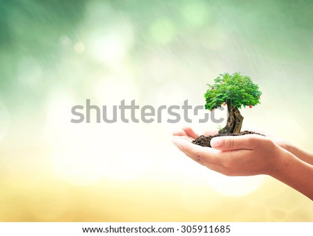 Human hands holding big fruitful green tree with soil over blurred rainy bokeh background. Save Sustainable Development Ecology, Agriculture, Go Green, Eco Friendly, Environmentally, CSR, concept. - stock photo
