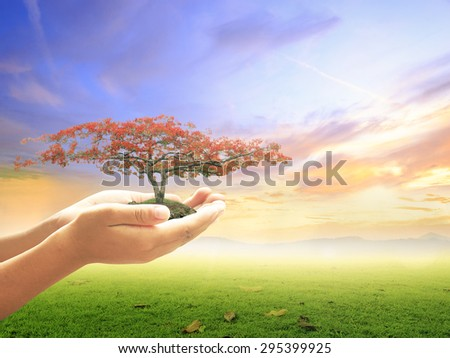 Human hands holding big plant with red flowers on over colorful sunset background. Ecology concept. World Environment Day, Insurance Agent, Love, Happy Valentine's Day, Romantic concept. - stock photo