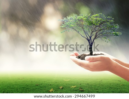 Human hands holding big tree or medium plant with rainy over beautiful circle bokeh light background. Ecology, World Environment Day, Investment, Insurance Agent, Trust, Ecological City, LIT concept. - stock photo