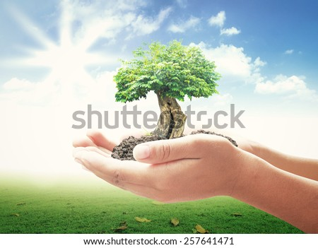 Human hands holding big tree over beautiful nature background. Ecology concept. - stock photo