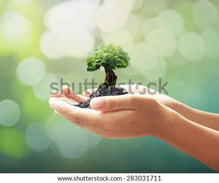 Human hands holding big tree with soil on blurred beautiful forest over green bokeh sunset background. Ecology concept. World Environment Day concept. - stock photo