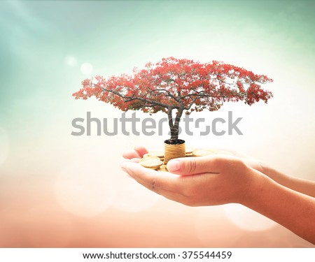 Human hands holding golden coins with red flower tree. Plan Investment Money ROI Gift Support Trust Charity Grow Idea CSR Business Fund Banking Saving Financial Dividend Payment Help Survival Concept - stock photo