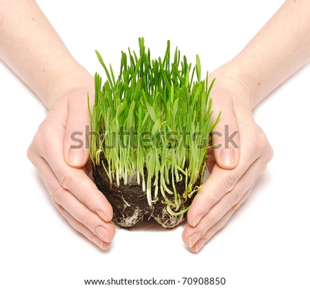 human hands holding green grass with ground isolated on white - stock photo