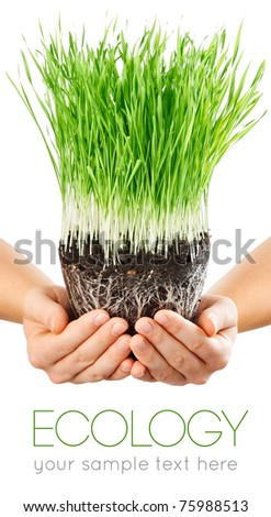 human hands holding green grass with ground isolated on white background - stock photo
