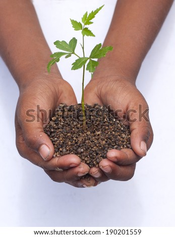Human hands holding green small plant-Business growth and new life concept.