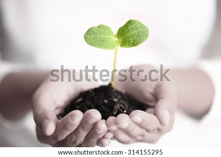 Human hands holding green small plant new & hopeful life concept. - stock photo