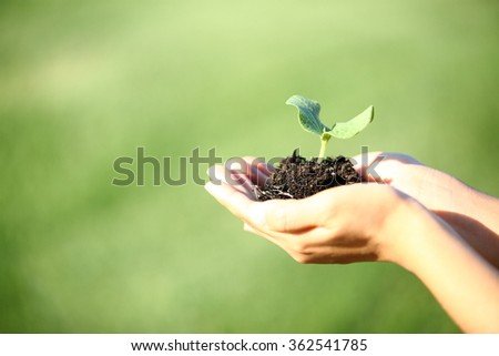 Human hands holding green small plant new life concept. - stock photo